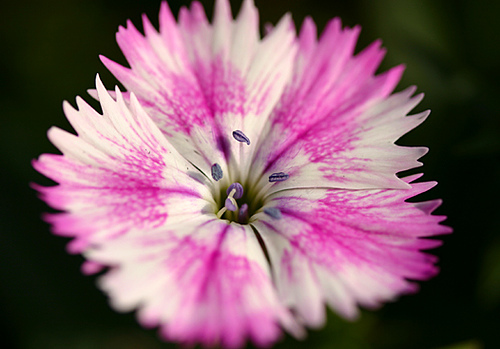 https://blog.serenataflowers.com/pollennation/wp-content/uploads/2016/05/300730853_3dbbae944e.jpg